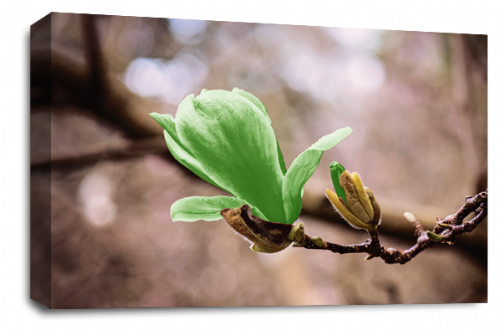 Floral Flower Wall Art Picture Grey Green Spring Print
